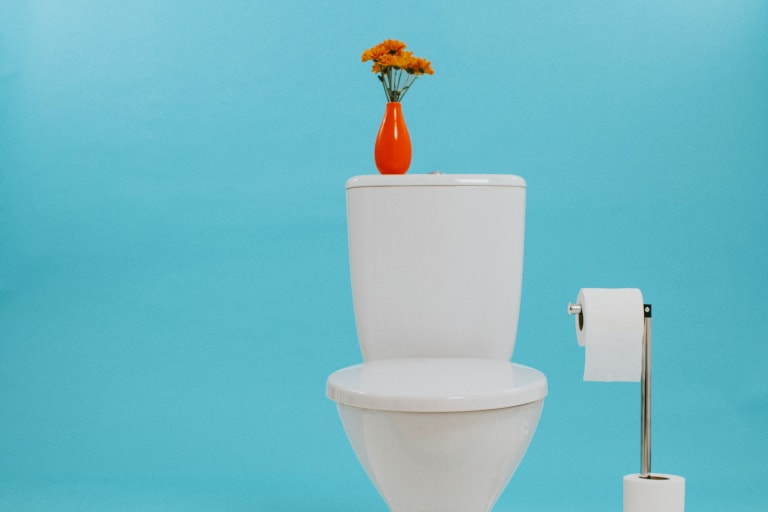 Diseases From Toilet Seat Surfaces Toilet Myth Busting