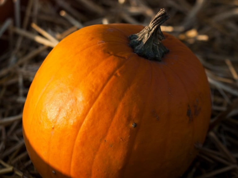 Sustainability: Pumpkins